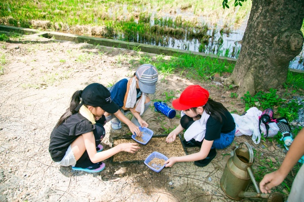 Students of the Japanese School of Hanoi are experiencing rice seedling-growing tray cultivation technique